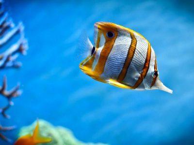 Reunião do Programa Nacional de Apoio à Cadeia Produtiva dos Organismos Aquáticos Ornamentais