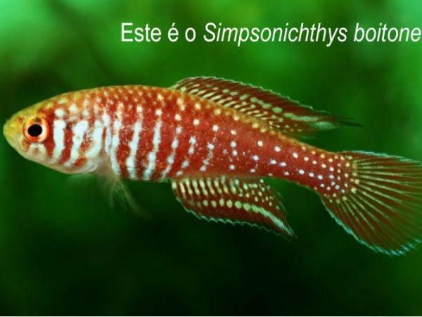 Estudo inédito mapeia 819 espécies de peixes raros no Brasil
